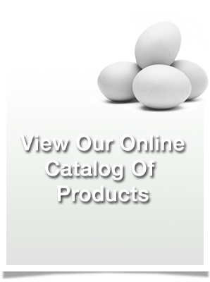 View Our Online Catalog of Products